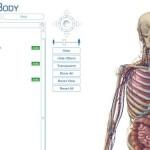 Anatomia del corpo umano virtuale in 3d con tutti gli apparati online gratis