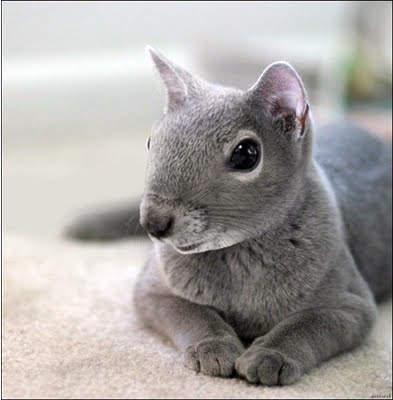 animale-photoshop