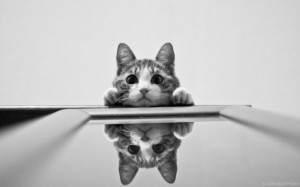 gatto piccolo