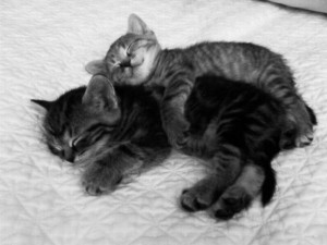 foto gatti dolci